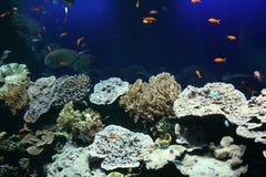 Тропические рыбы в аквариуме Стоковые Фото