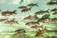 Тропические рыбы в гигантском аквариуме стоковые изображения rf