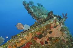 Тропические рыбы и Encrusted кораллом кораблекрушение - Roatan, Гондурас стоковые изображения