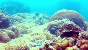 Тропические рыбы на камнях и кораллах акции видеоматериалы
