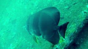 Тропические рыбы на камнях и кораллах сток-видео
