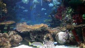 Тропические рыбы на коралловом рифе акции видеоматериалы