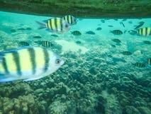 Тропические рыбы под шлюпкой Стоковые Фотографии RF