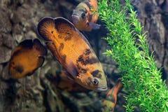 Тропические рыбы плавают около кораллового рифа жизнь подводная стоковое фото