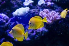 Тропические рыбы плавают около кораллового рифа жизнь подводная стоковое изображение rf