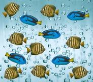 Тропические рыбы рифа в воде Стоковое фото RF