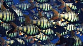 Тропические рыбы Стоковые Изображения RF