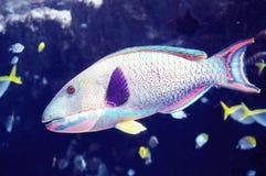Тропические рыбы Стоковое Фото