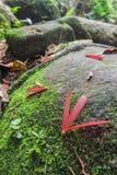 Тропические семена дерева на поле тропического леса - серии 2 Стоковая Фотография RF