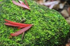 Тропические семена дерева на поле тропического леса Стоковое Изображение