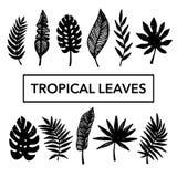 Тропические установленные листья Стоковая Фотография