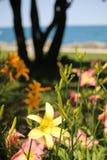 Тропические цвета Стоковое Изображение RF