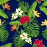 Тропические цветки и листья на голубой предпосылке Иллюстрация штока