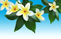 Тропические цветки Стоковые Фотографии RF