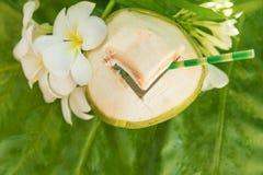 Тропические экзотические питье и цветки плодоовощ кокоса Стоковая Фотография
