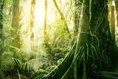 Тропические джунгли Стоковая Фотография