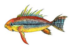Тропические cacatuoides apistogramma рыб Стоковое Изображение