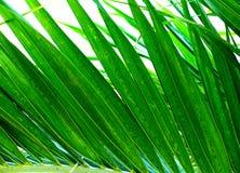 Тропические fronds ладони против белой предпосылки jpg Стоковое Фото