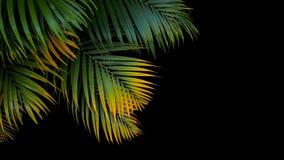 Тропические fronds листьев ладони, зеленых и желтых ладони на задней части черноты Стоковое фото RF