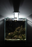 Тропический аквариум, утесы, мох Стоковые Фото