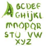 Тропический алфавит сделанный из листьев ладони банана Нарисованный рукой зеленый abc paradice Естественные письма лета вектор те Стоковые Изображения