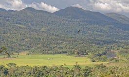 Тропический ландшафт и озеро стоковая фотография rf