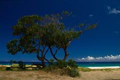 Тропический ландшафт пляжа Стоковое Изображение