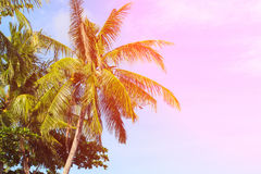 Тропический ландшафт с ладонями Крона пальмы на голубом небе Солнечный тропический остров тонизировал фото Стоковое Фото