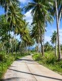 Тропический ландшафт с дорогой и пальмой Ландшафт лета с дорогой через сельскую землю Стоковая Фотография RF