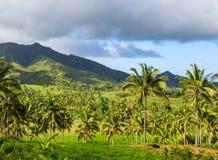 Тропический ландшафт с пальмой и горой Взгляд голубого неба с пальмами кокосов Стоковое Изображение RF