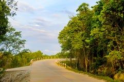 Тропический ландшафт с пустой дорогой и зеленой обочиной Стоковое Изображение