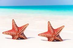 Тропический белый песок с красными морскими звёздами в чистой воде стоковое изображение
