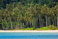 Тропический берег моря кокосовой пальмы Стоковые Фотографии RF
