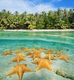 Тропический берег разделенный с underwater морских звезд Стоковое Изображение
