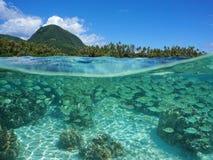 Тропический берег разделенный с underwater школы рыб Стоковое фото RF