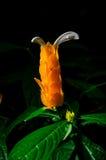 Тропический бутон Стоковое Фото