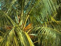 Тропический взгляд верхн-дна кокосовой пальмы стоковая фотография