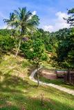 Тропический взгляд ландшафта парка Стоковое Фото