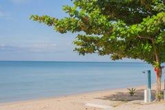 Тропический взгляд зеленых дерева и моря Стоковые Изображения RF