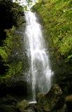 Тропический водопад Стоковое Изображение