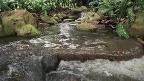 Тропический водопад джунглей видеоматериал