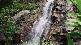 Тропический водопад джунглей сток-видео