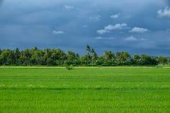 Тропический горизонт перед дождем Стоковые Изображения RF