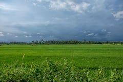 Тропический горизонт перед дождем Стоковые Фотографии RF