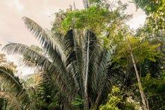 Тропический лес Амазонки, легкие нашей планеты, эквадора Стоковое Изображение