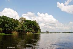 Тропический лес Амазонки: Ландшафт вдоль берега Амазонкы около Манаус, Бразилии Южной Америки Стоковая Фотография RF