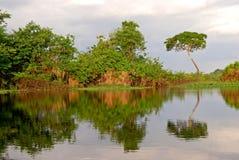 Тропический лес Амазонки: Ландшафт вдоль берега Амазонкы около Манаус, Бразилии Южной Америки Стоковые Изображения