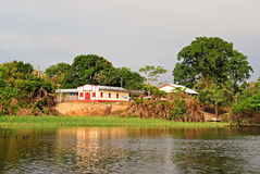 Тропический лес Амазонки: Ландшафт вдоль берега Амазонкы около Манаус, Бразилии Южной Америки Стоковая Фотография