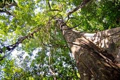 Тропический лес Амазонки: Природа и заводы вдоль берега Амазонкы около Манаус, Бразилии Южной Америки Стоковые Изображения RF