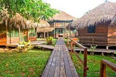 Тропический лес Амазонки: Тропа вдоль Амазонкы около Манаус, Бразилии Южной Америки Стоковые Изображения RF